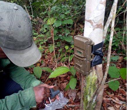 Gabon/Faune: De puissants algorithmes d'intelligence artificielle en vue d'assurer le suivi de la faune en Afrique centrale
